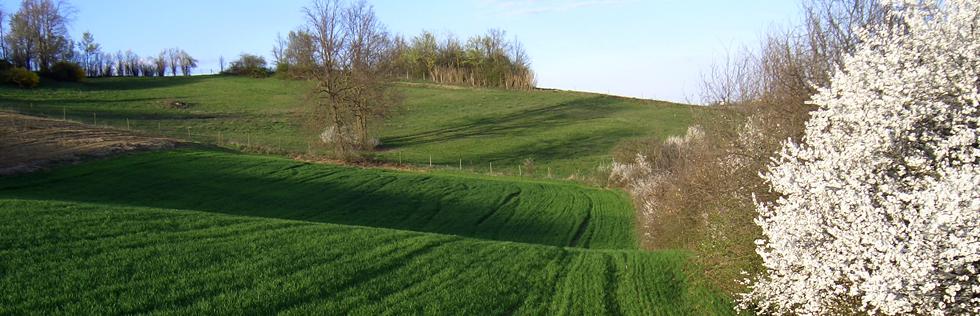 FAI e WWF Italia, insieme per un dossier sul consumo di suolo