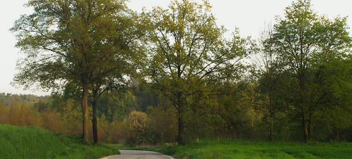 legambientevaltriversa-querce