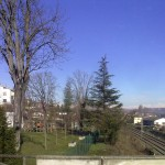 alberi-abbattuti-01