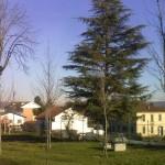 alberi-abbattuti-02
