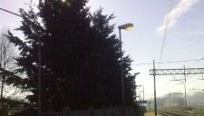 alberi-abbattuti-04