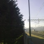alberi-abbattuti-05