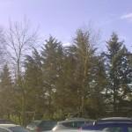 alberi-abbattuti-06