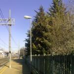 alberi-abbattuti-07