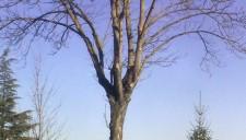 alberi-abbattuti-vert-01