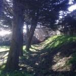 alberi-abbattuti-vert-03