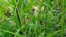 passeggiata-orchidee-2013-5