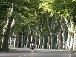 alberata-stradale